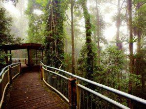 dorrigo national park rainforest walkway