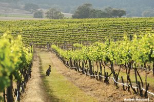 Hunter Valley, New South Wale
