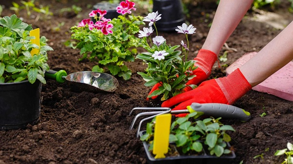 A person planting a flower in the soil